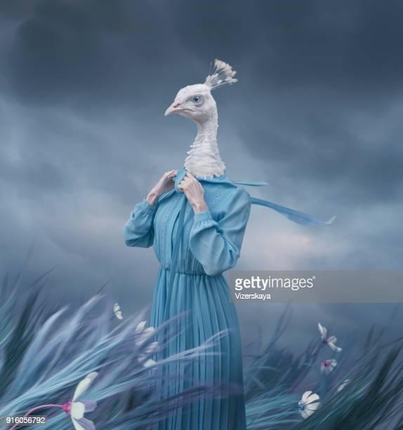 surrealistisch portret van witte pauw - beeldmanipulatie stockfoto's en -beelden