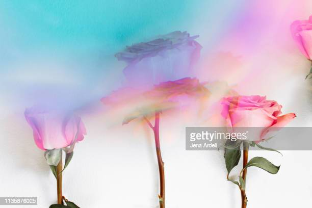 surreal roses, flowers, love, dreamy, dreamlike, trippy, prism, colorful daydream, focus - jena rose stockfoto's en -beelden