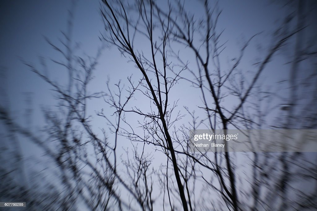 Surreal trees : Stock Photo