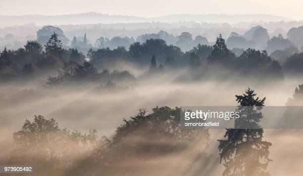 surrey hills sunrise - surrey england bildbanksfoton och bilder