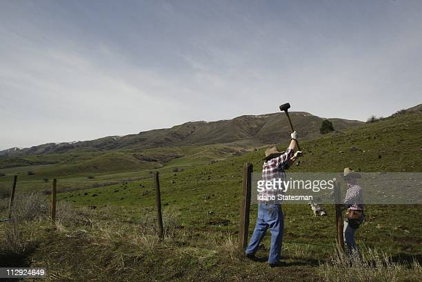 Surrounded by scenic mountain vistas Carol Shultz left and Bev Martin pound fence posts into rocky soil on their ranch above Ola Idaho April 12 2006...