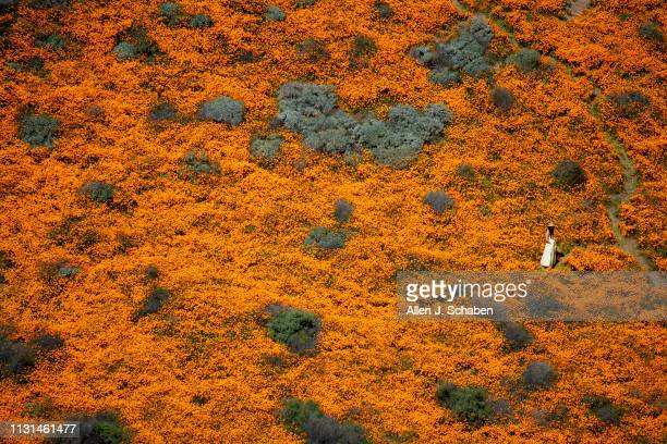 Surrounded by the Super Bloom a visitor poses for photos in the middle of the Lake Elsinore Poppy Fields in Walker Canyon after the city closed the...