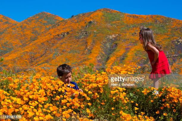 Surrounded by the wildflower super bloom Kaleb and Ava Gutierrez of Aliso Viejo play amid the poppies while taking in the rare scenery of the Lake...