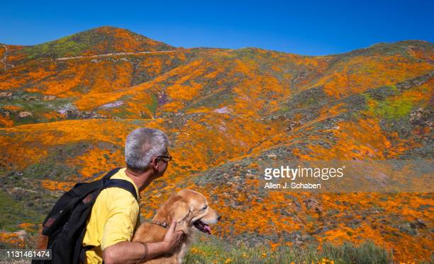 Surrounded by the wildflower super bloom Paul Yamashita of Pasadena hugs his golden retriever Dylan while taking in the rare scenery of the Lake...