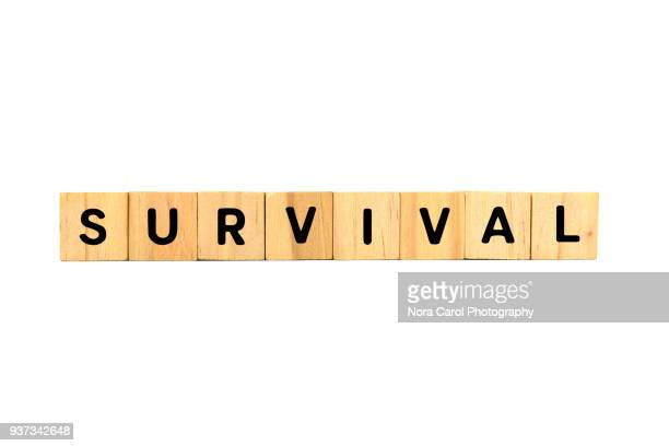 Survival Text on Wooden Blocks on White Background