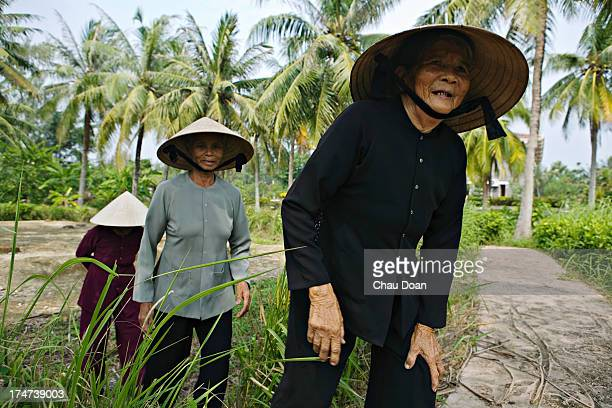 Survivors of the My Lai massacre from right Ha Thi Quy Pham Thi Thuan and Truong Thi Le tour the site where the massacre of 504 defenceless...