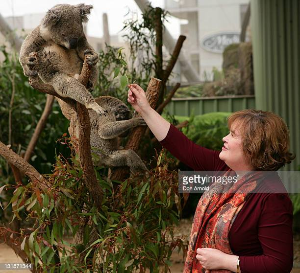 Susan Boyle helps feed a koala during a visit to WILD LIFE Sydney on November 6 2011 in Sydney Australia This is Susan's first visit to Australia