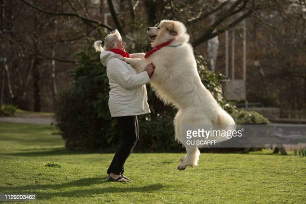 Susan Reilly and her Pyrenean Mountain Dog named Boris arrive to attend the second day of the Crufts dog show at the National Exhibition Centre in...