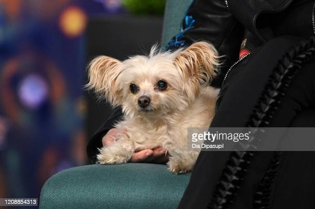 Susan Sarandon's dog Penny at Build Studio on February 26 2020 in New York City