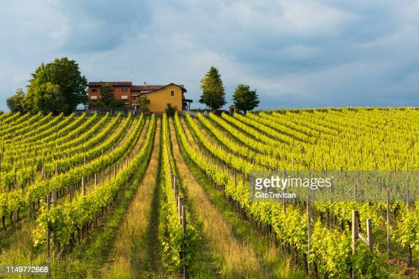 buy online 0213b 910f7 60 Top Veneto Wine Pictures, Photos and Images - Getty Images