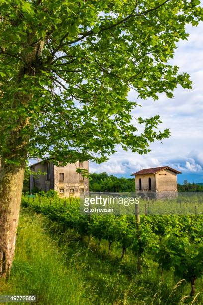 susegana -view of the prosecco vineyards in the famous hills around conegliano veneto - veneto stock pictures, royalty-free photos & images