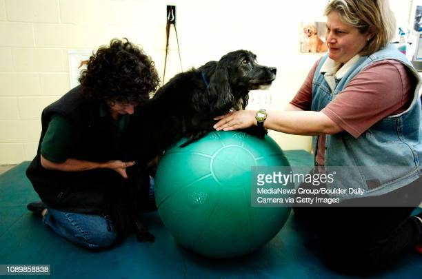 Susie Finley left helps Blackie a 12yearold English springer spaniel mix who went through recent back surgery to bear weight on his weakened hind...