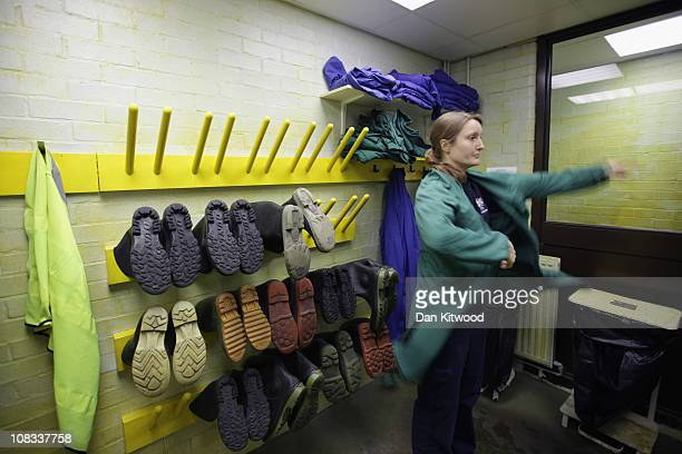 Susie Perry puts on an overcoat and boots at Heathrow Airport's Animal Reception Centre on January 25 2011 in London England Many animals pass...