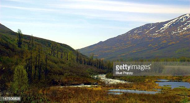 susitna little susitna river - mt. susitna stock pictures, royalty-free photos & images