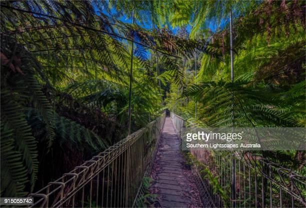 Suspension bridge and walkway at Tarra Bulga National Park, South Gippsland, Victoria.
