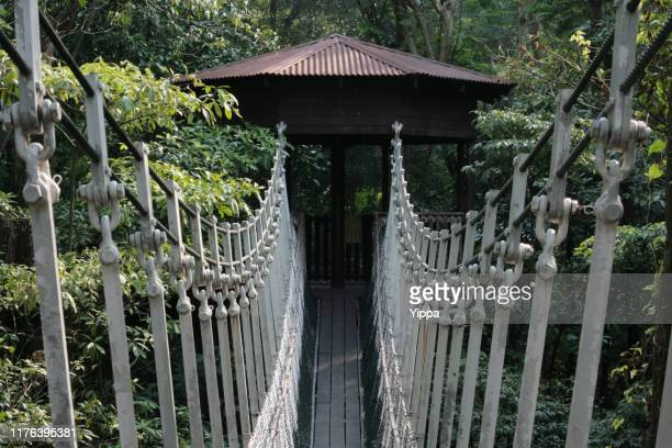 a suspension bridge in a forest to tree house - jurong bird park stock pictures, royalty-free photos & images