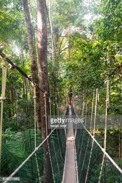 suspension bridge in jungle, kuala tahan, taman negara national park, malaysia - taman negara national park stock photos and pictures