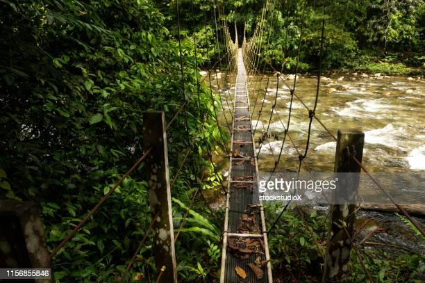 suspension bridge in the jungles of borneo - island of borneo stock pictures, royalty-free photos & images