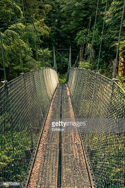 Suspension Bridge on the Kepler Track, New Zealand South Island