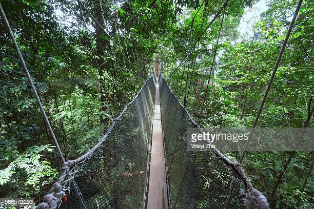 suspension bridge - kota kinabalu stock pictures, royalty-free photos & images