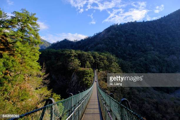 Suspension Bridge , valley, forest
