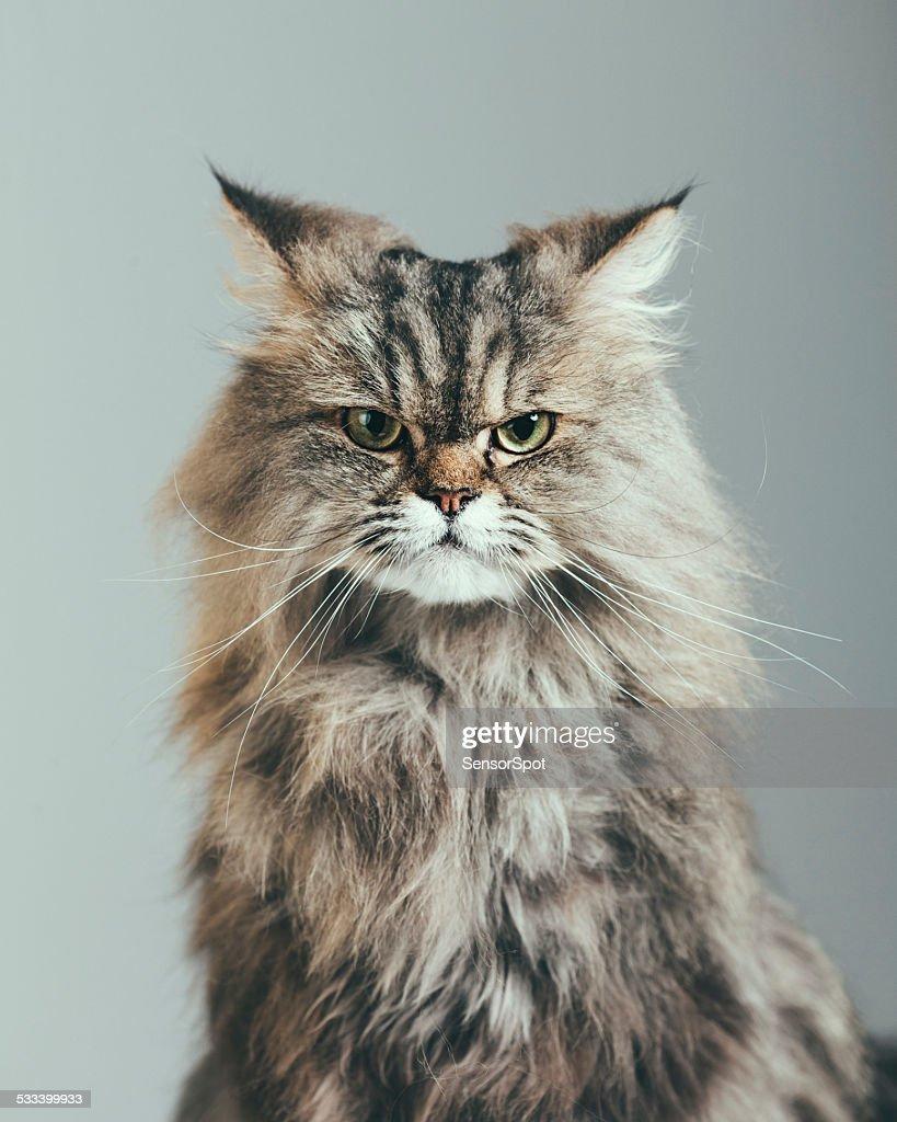 Suspicious cat portrait : Stock Photo