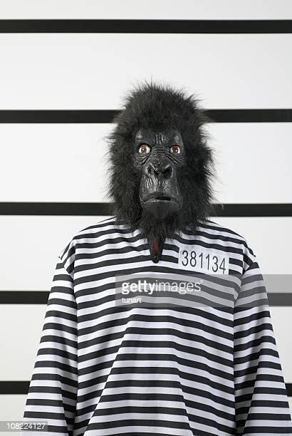 Suspicious Gorilla