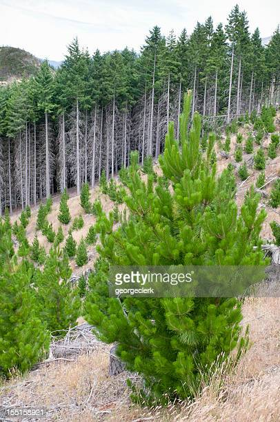 Sustainable Forestry Management