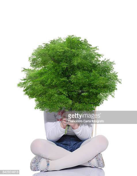 sustainable growth - arbusto - fotografias e filmes do acervo