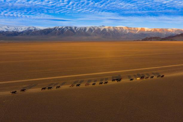 Sutai Mountains, between Gobi-Altai Province and Khovd Province, Chowd-Aimag, Mongolia