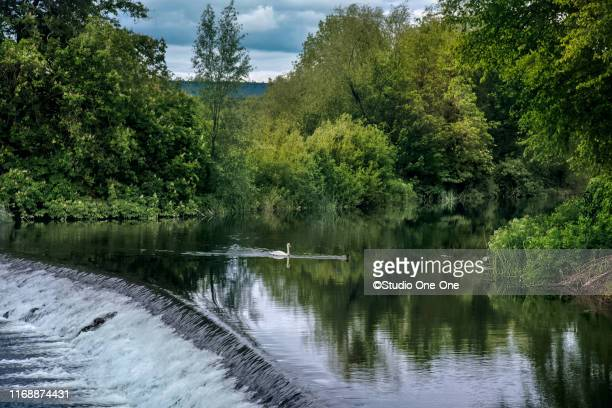 swain on river suir - ティッペラリー州 ストックフォトと画像