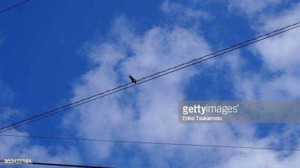 A swallow and cables against blue sky