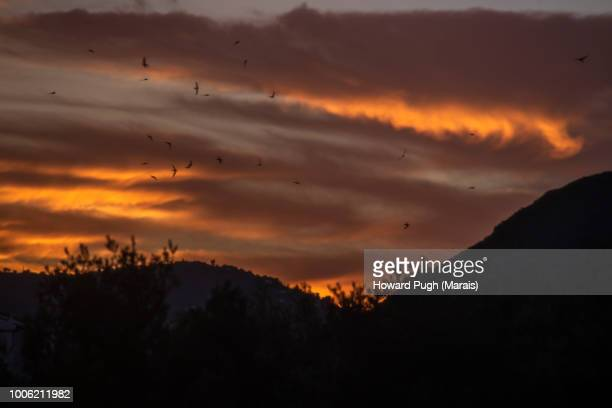 Swallows Swoop Under Spanish Sunset Skies