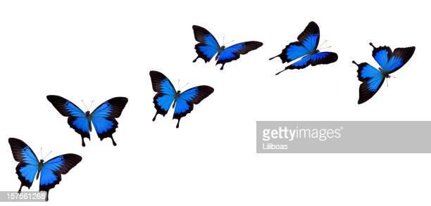 Mariposa cola de golondrina