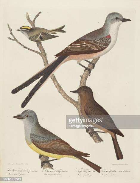Swallow-tailed Flycatcher, Arkansas Flycatcher, Say's Flycatcher, and Female Golden-crested Wren. Artist Alexander Lawson.