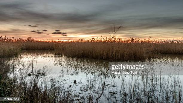 Swamp at dusk