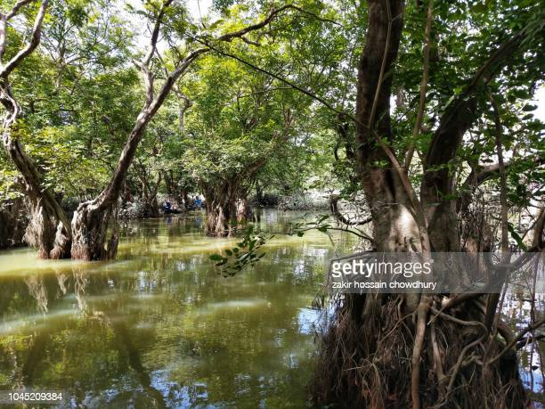 swamp forest - everglades national park stock pictures, royalty-free photos & images