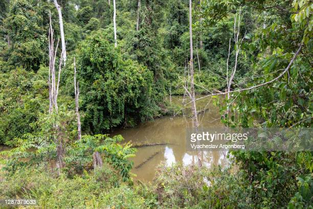 swamp lake in the forest, borneo, malaysia - argenberg stock pictures, royalty-free photos & images