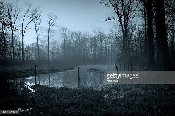 swamp - salt_marsh stock pictures, royalty-free photos & images