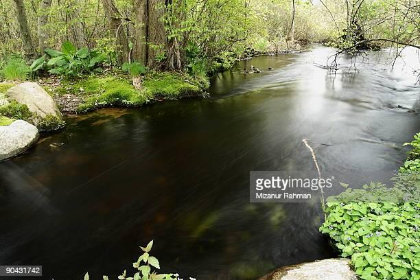 swamp - mizanur rahman stock pictures, royalty-free photos & images