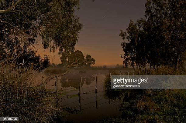 swamp - swamp stock pictures, royalty-free photos & images