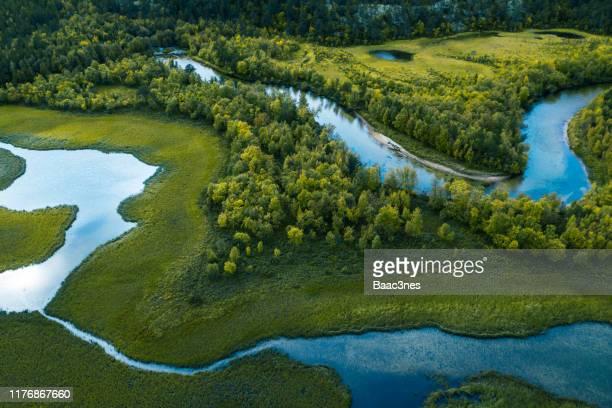 swamp, river and trees seen from above - jord bildbanksfoton och bilder