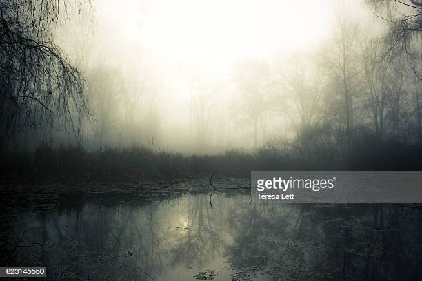 Swamp with fog