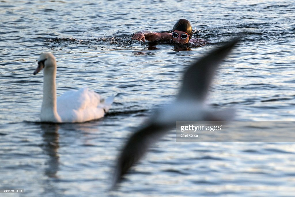 A swan and gull pass by as a member of the Serpentine Swimming Club enjoys an early morning swim in Serpentine Lake in Hyde Park on November 30, 2017 in London, England. Today marks a cold end to meteorological autumn with snow forecast in northern parts of the country.