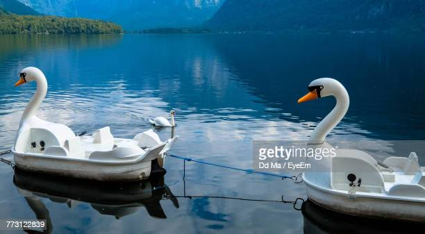 Swan Boats Floating On Lake