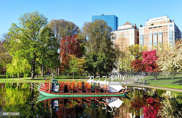 swan boats on the boston public garden - boston common stock pictures, royalty-free photos & images