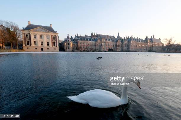 A swan floats in the partially frozen Hofvijver or 'Court Pond' in front of Mauritshuis museum and Binnenhof on February 28 in The Hague Netherlands