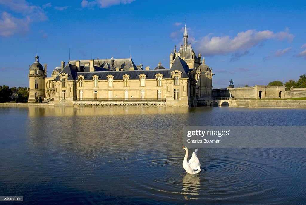 Swan in lake by Chateau de Chantilly, Picardie, France : Stock Photo