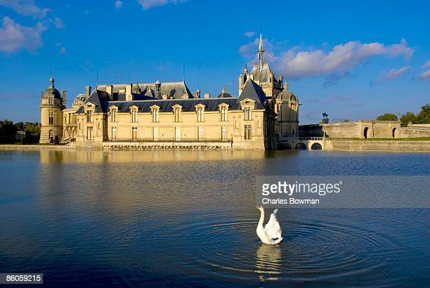 swan in lake by chateau de chantilly, picardie, france - oise stock photos and pictures