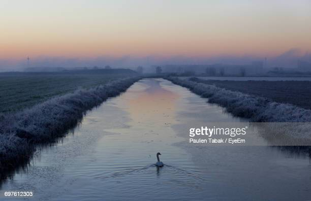 swan in river against sky during sunset - paulien tabak stock pictures, royalty-free photos & images